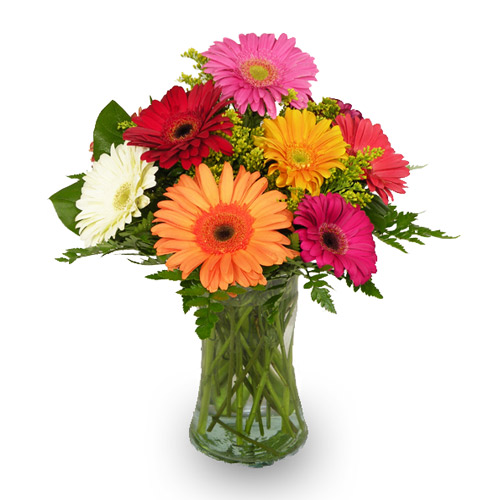 A Wylie Flower Shop exclusive. As a child, the daisy foretold love-me, love-me not. These beautiful gerbera daisies are too beautiful to play that game with. So just assume it's love-me and send this delightful bouquet and leave the guessing to someone else.<br/><br/>